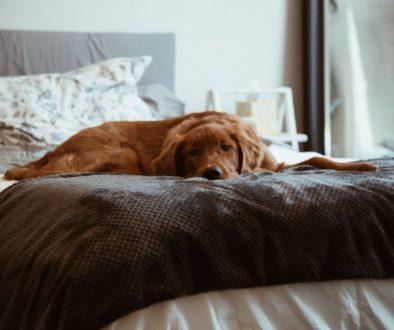Pes v posteli