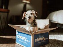 Chewy / Unsplash.com