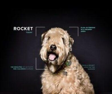 Mars Petcare Rocket