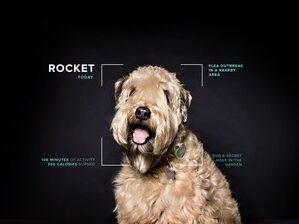 Mars Petcare Rocket / Mars Petcare