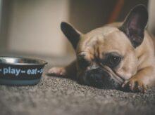 puppy beside pet bowl