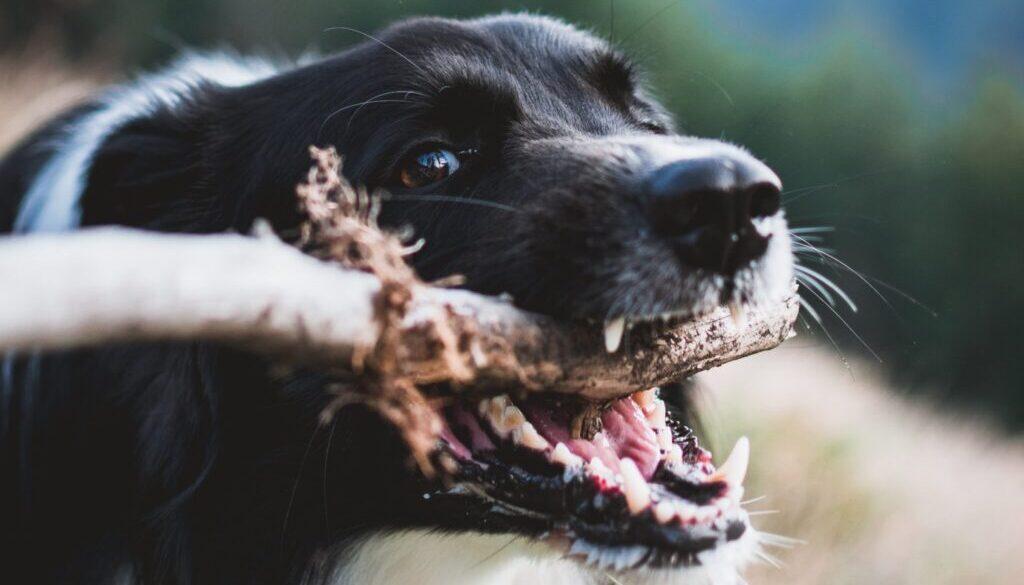 shallow focus photography of dog