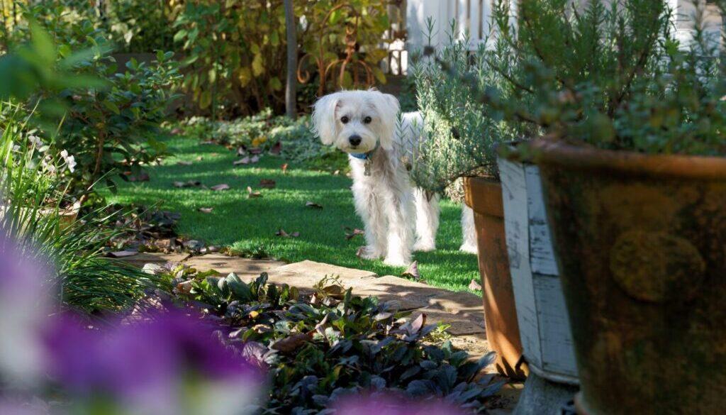 long-coated white dog on grass fild