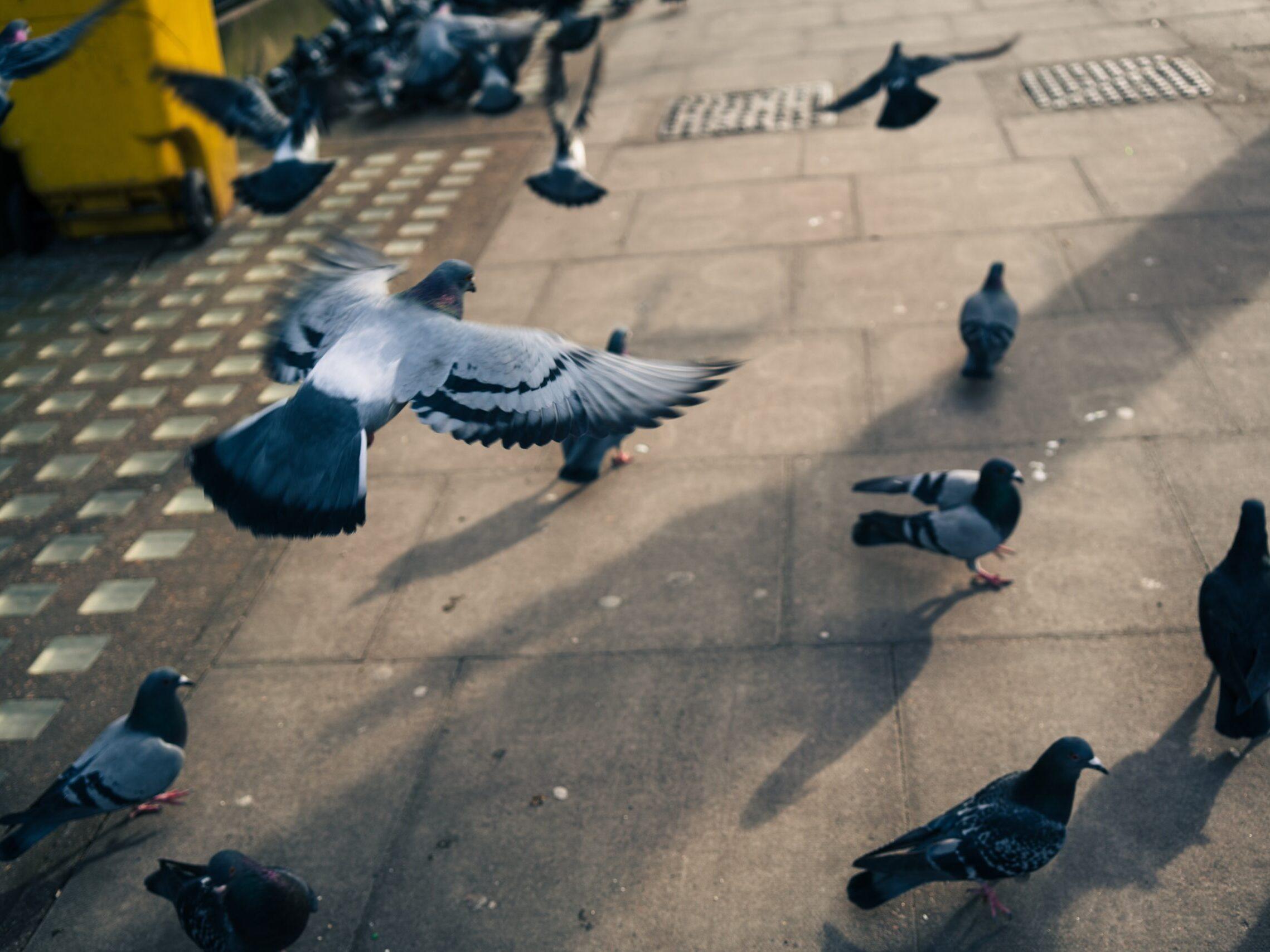 flock of pigeons on gray concrete floor