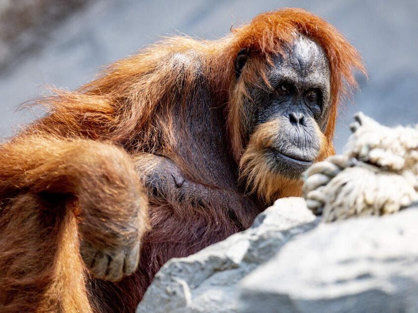 foto / Zoo Hagenbeck