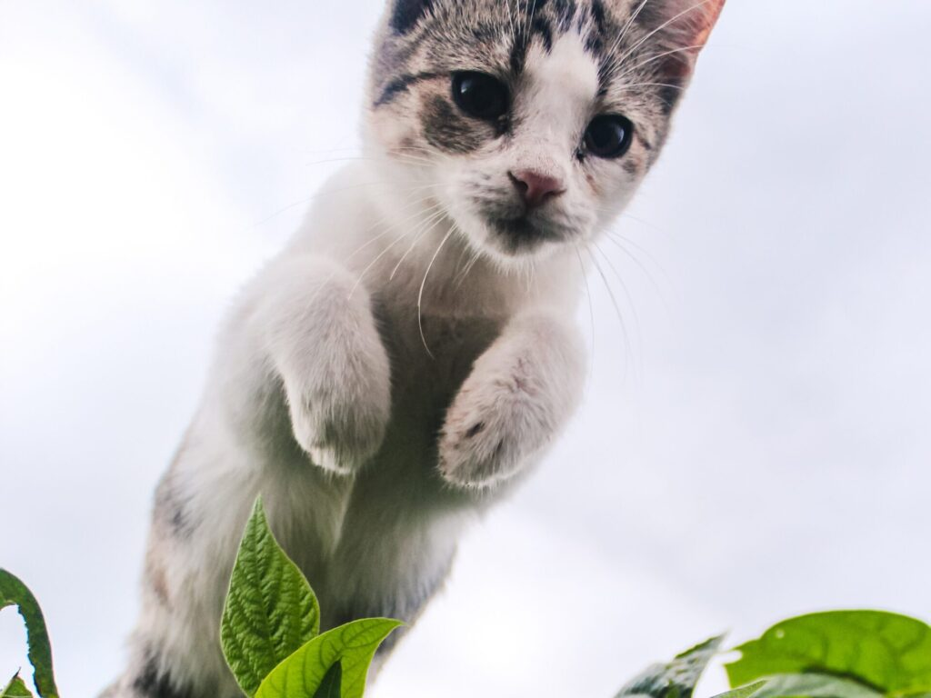 white cat on green plant
